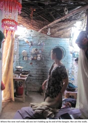 peregrine in our third slum home